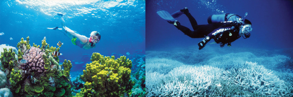 Foto van verbleking Great Barrier Reef