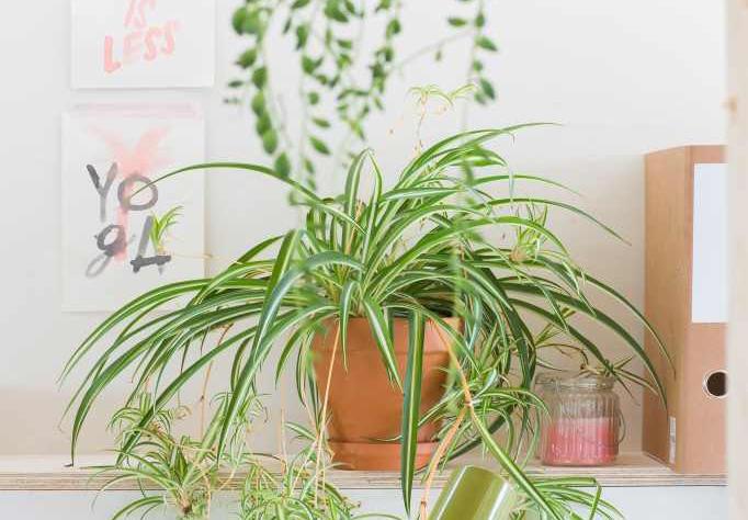 5 Planten Die Je Gerust Boven Je Verwarming Kunt Zetten Hier