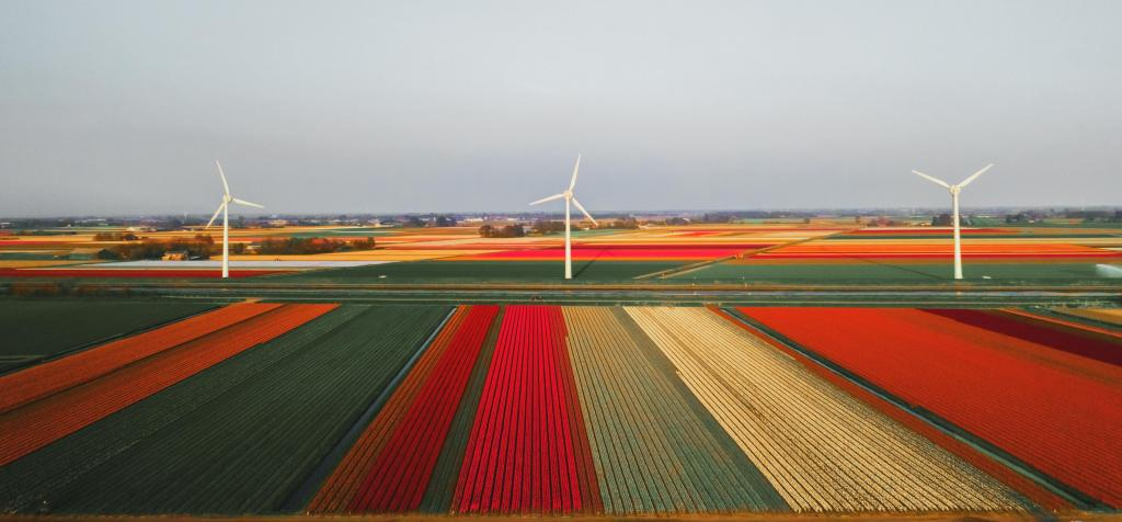 Foto van windmolens in tulpenvelden - Photo by redcharlie on Unsplash